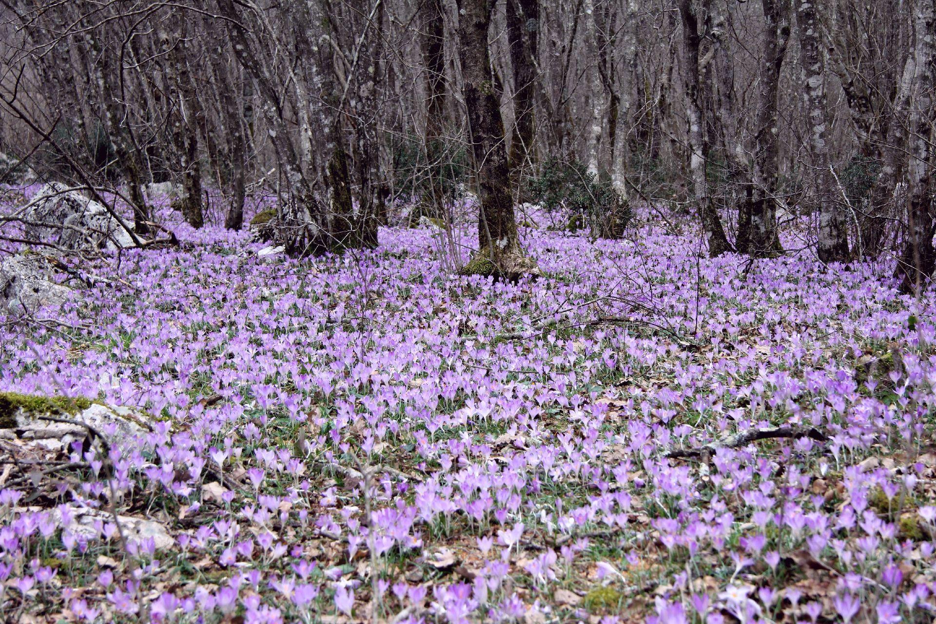 spring Skadar Lake1