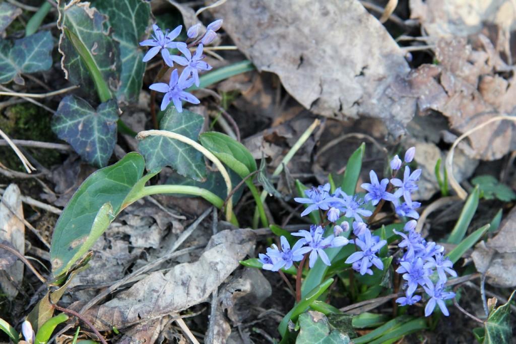 spring Skadar Lake4