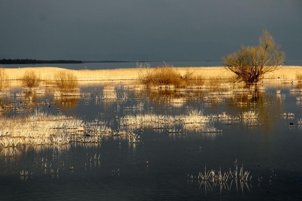 spring Skadar Lake6