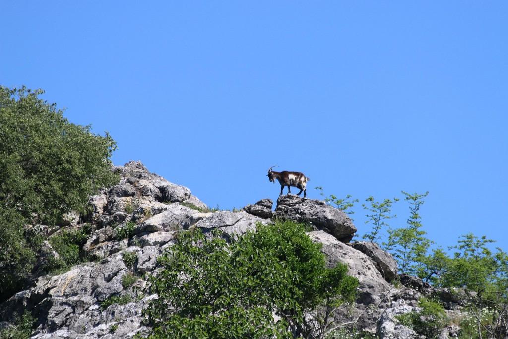 Kosmac monastery3 goat island