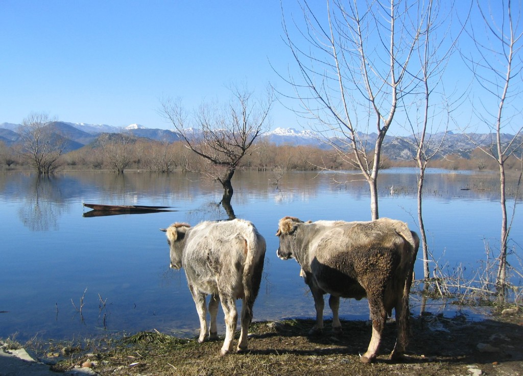 Skadar lake3 winter