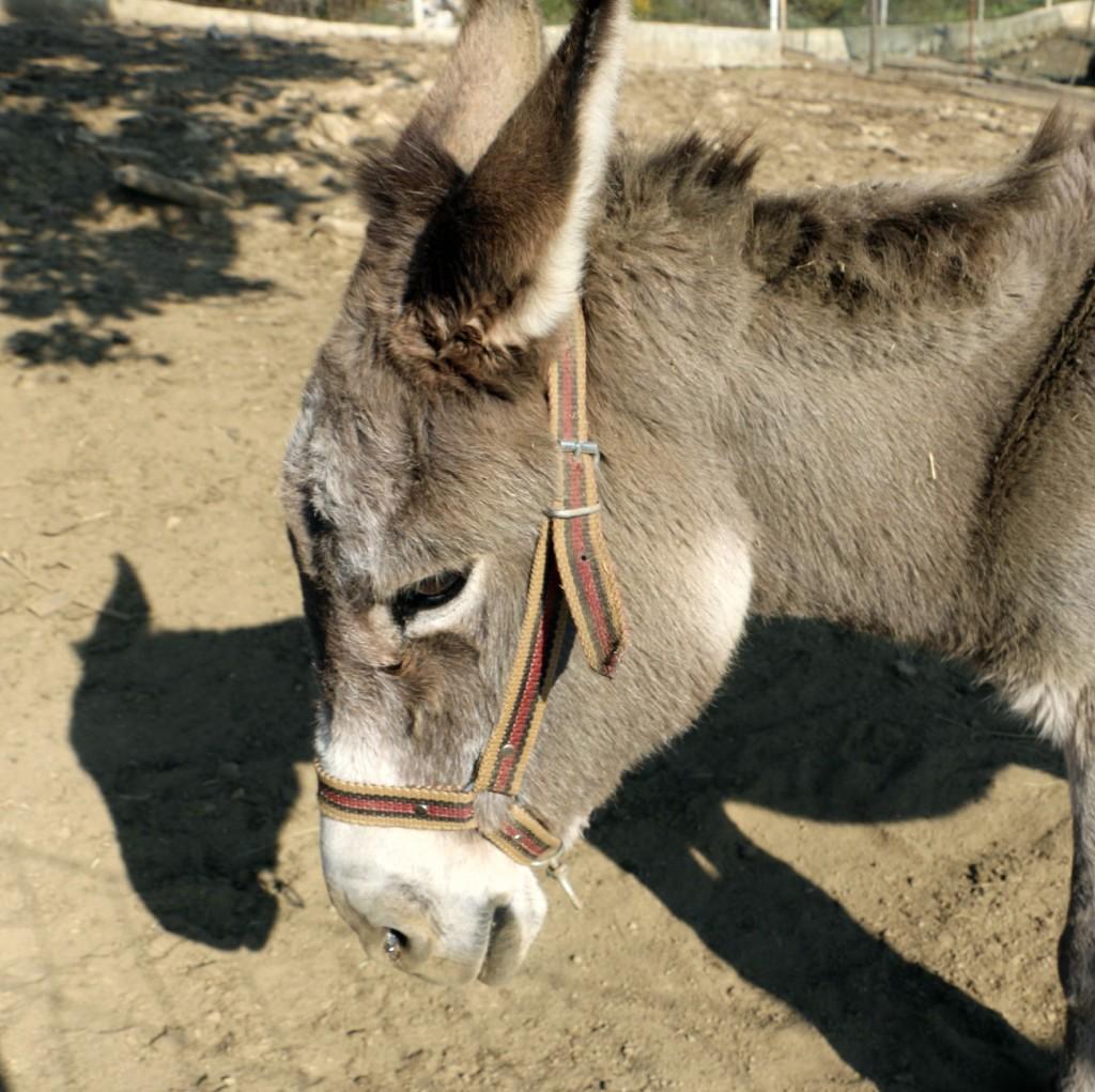 Donkey farm3 Martinici