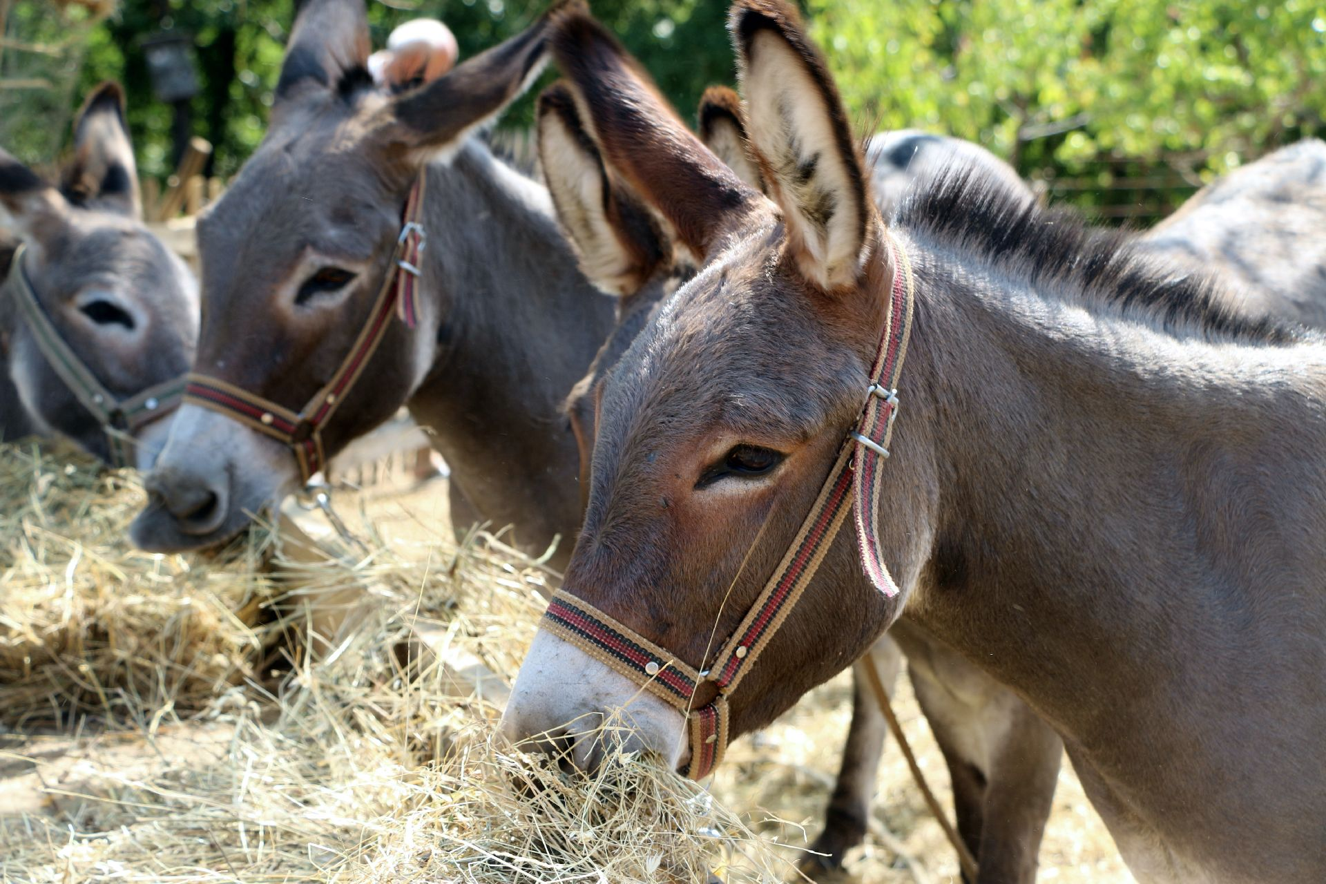 Farm donkeys - photo#7