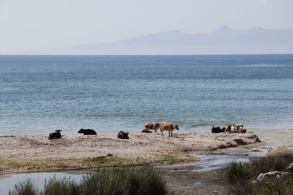 South Albanian coast5