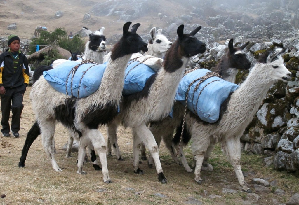 9 Bolivia Takesi trail2