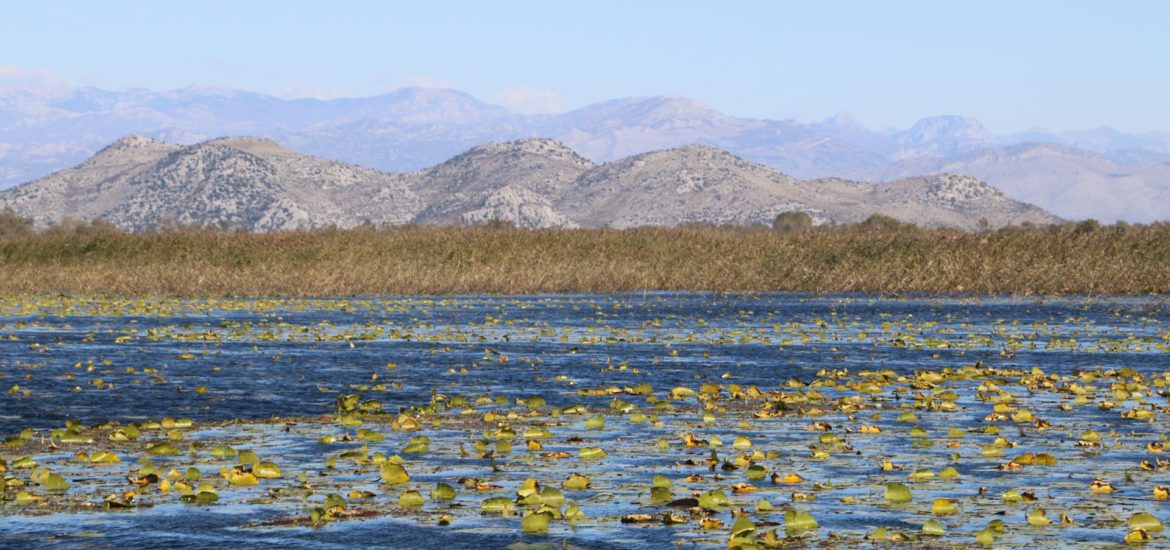 skadar-lake-featured-image