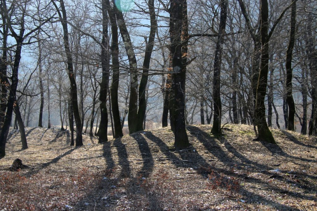 forest in Kujava Bjelopavlici6